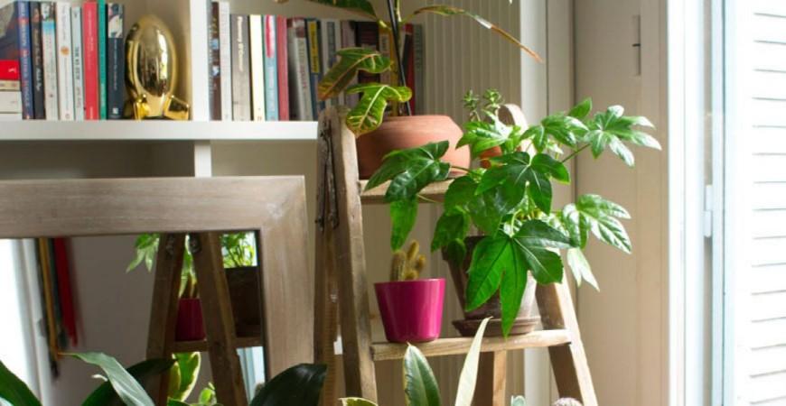 Gana espacio con esta escalera para colocar tus plantas