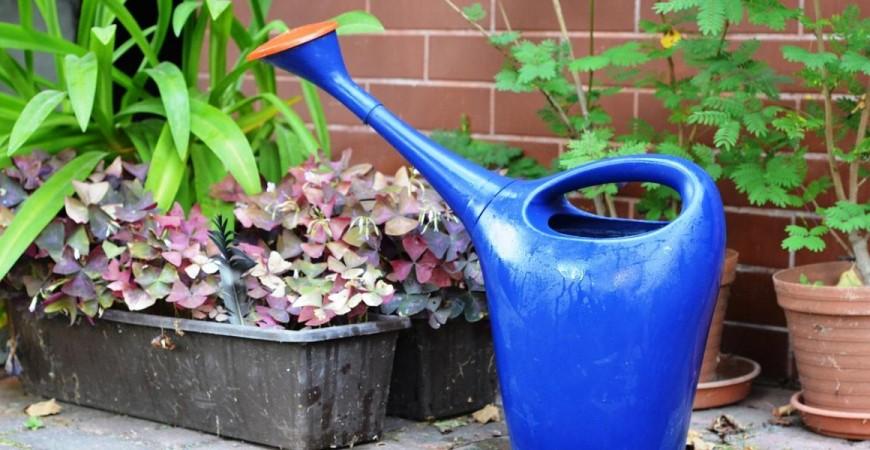 Protege tus plantas del calor